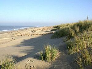Düne und Strand am Leuchtturm auf Texel